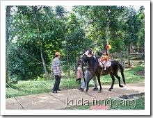 kuda-tunggang